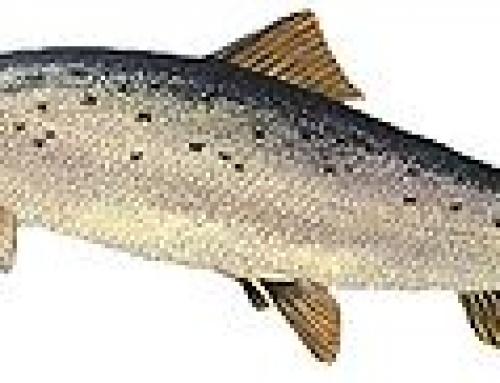 Fisk og sjømat for barn og unge
